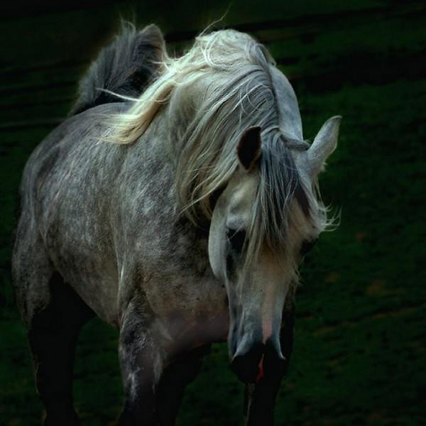 кому лошадок - 2