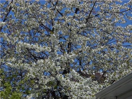 А вот такая прелесть росла и цвела под окнами нашего апартмента - 6