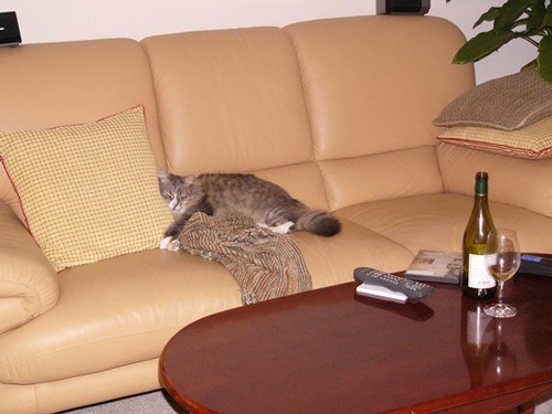 """Пятница, вечер Суббота, утро Со странички """"Наши животные"""""""