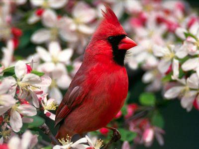 вот фото канадских птичек ещё раз пошлю
