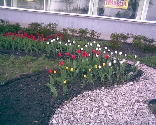 А вот немного и нашей весны - 6