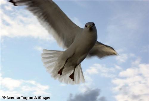 Вот такие птички - 4