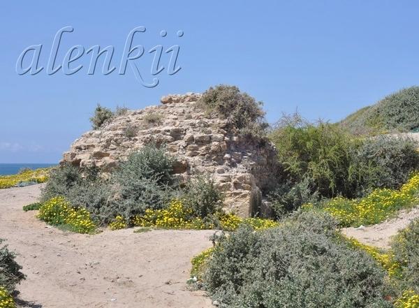 На скале,среди осколков древнего строения растут цветы