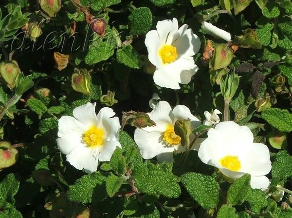 Весна у нас короткая и недолго балует нас свежестью воздуха и приятной прохладой - 7