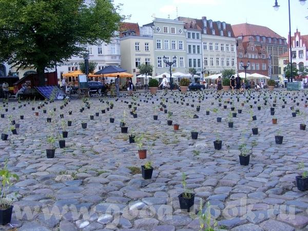А у нас сегодня была акция, вся площадь в центре города была заставлена горшочками с саженцами разн...