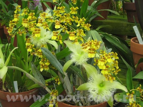 вот это орхидеи - 4