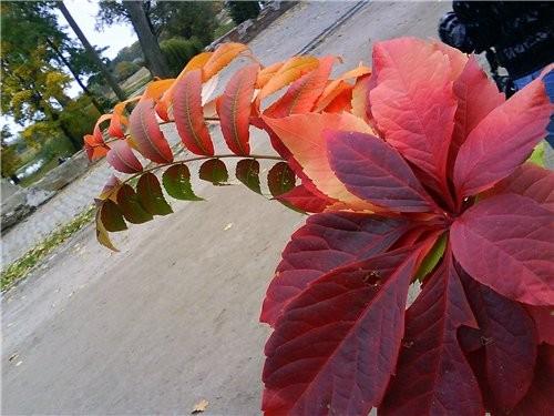 А это осень в нашем городе - 2