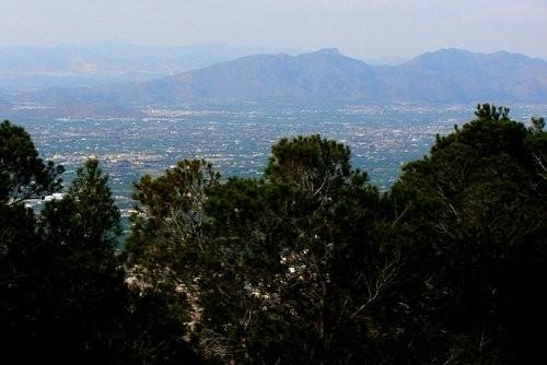 А ето гора Альберка - 4