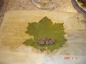 Хочу поделиться рецептом приготовления долмы (фаршированные виноградные листья) - 3