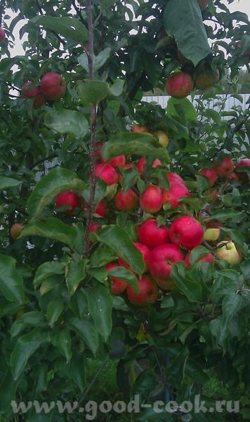пусть год принесет много творческих плодов, как эта яблоневая веточка - 2