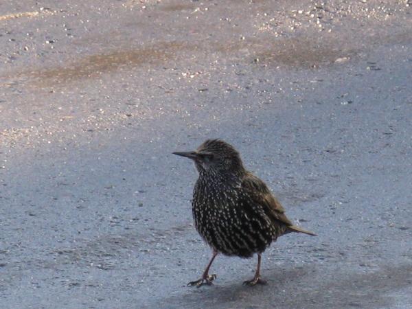 птичка неизвестной породы Зимние виды их окна