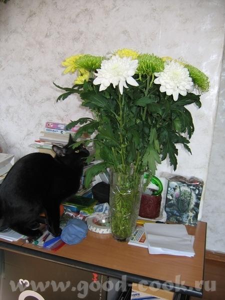чудесные фотографии домашних любимцев - 4