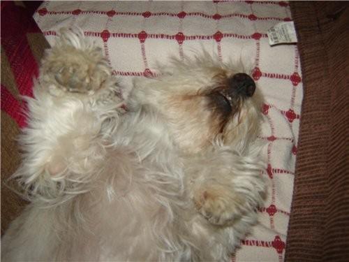 А ето наше чудо мы тоже брали с собой, ето Бланка вот так она всегда спит - 3