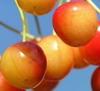 Смородина черная и красная Рецепт смородинового варенья от pasha Варенье из чёрной смородины от Eme... - 2