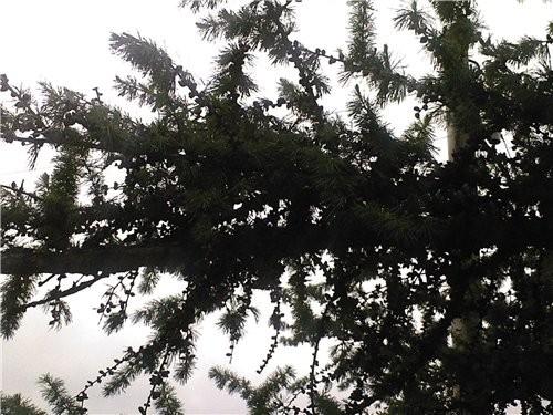 Вот сегодня такая пасмурная погода: холод, ветер, крапает - 3