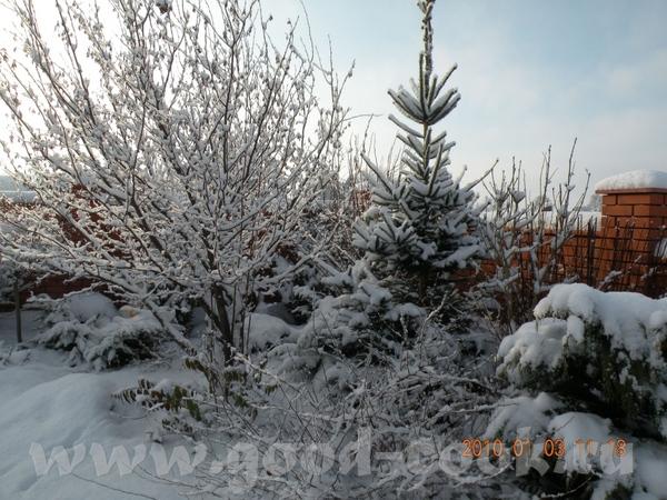 Девочки, мой огород летом вы видели, предлагаю посмотреть зимой - 6