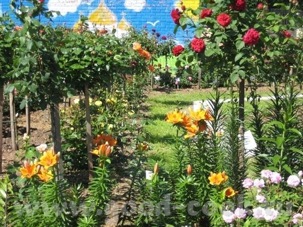 Покажу вам ещё немного цветов рядом со своим домом - 2