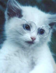 Для любителей котов и кошек - 3