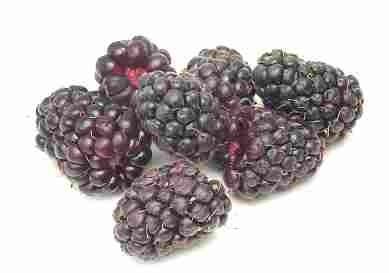 Черника (blueberry) Выбирайте упругие, твердые ягоды, темные с белесым налетом - 2