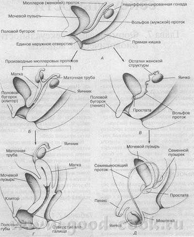 normi-polovoy-zhizni-v-seksologii