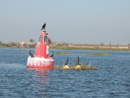 Птиц в дельте Нила полно - 3