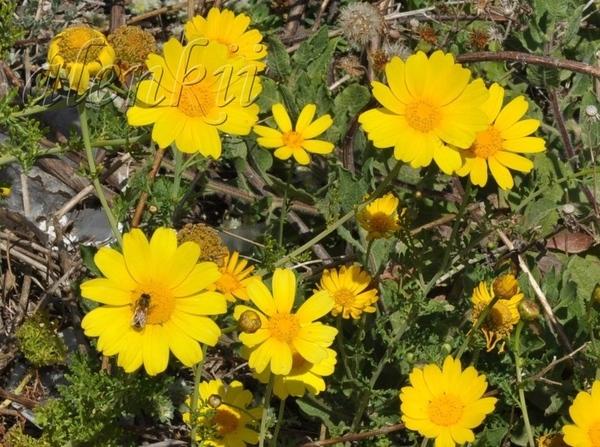 На скале,среди осколков древнего строения растут цветы - 3
