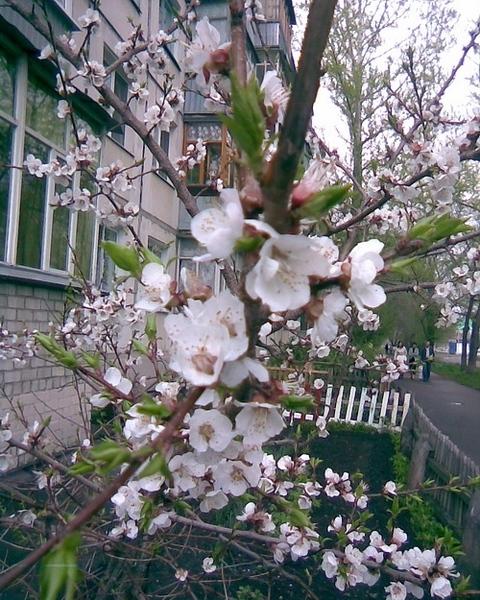 А вот немного и нашей весны - 3