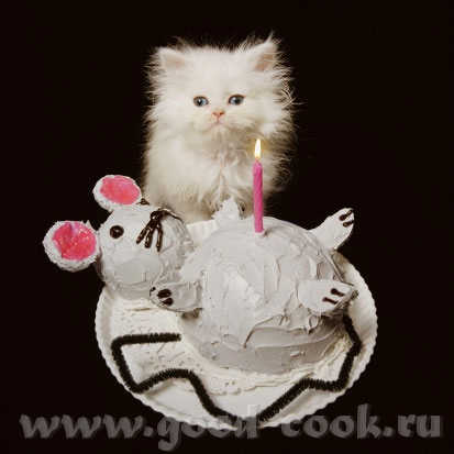 открытка др котик с тортиком