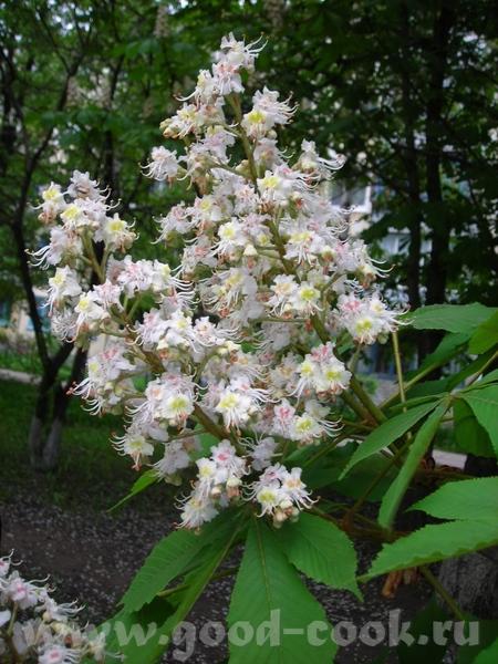 У нас ландыши и каштаны вовсю цветут - 4