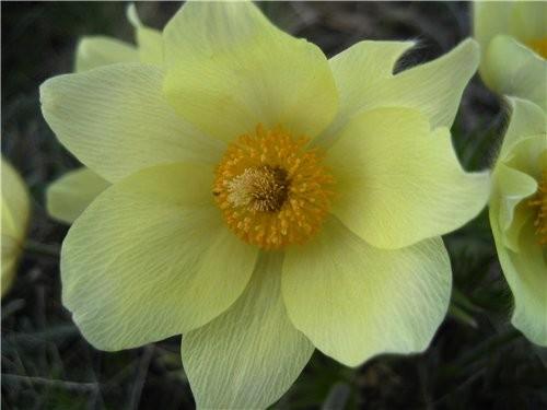 Танюша, мы вчера вечером с Рошелькой поехали в лес, что бы тебе цветы насобирать