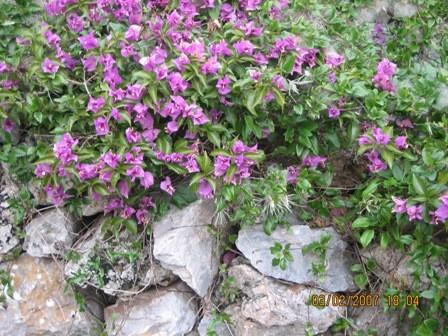 Около крепости увидела цветок