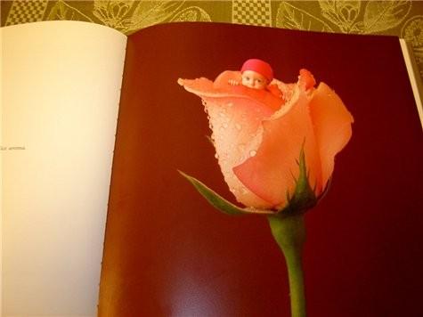 А я после отпуска, наконец то нашла альбом Anne Geddes с великолепными фото младенцев - 3