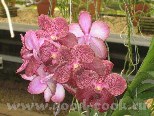 вот это орхидеи - 2