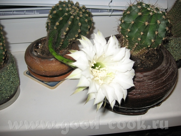 Мейта, Люсек , девочки дарю всем у кого неприятности и приятности - такой цветок