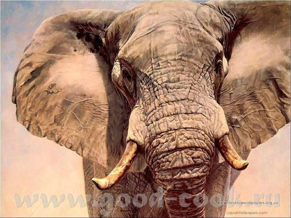Слон классный - 2