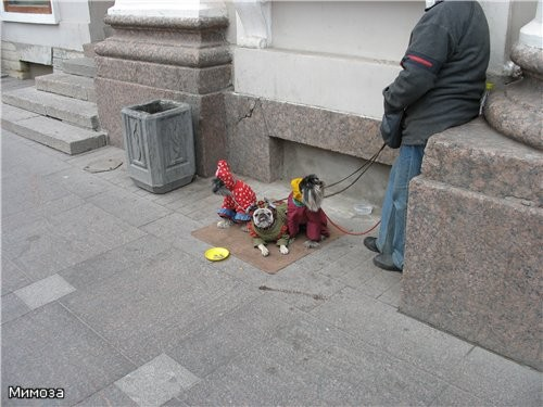 """""""Картинка с выставки"""" - обитатели Невского проспекта"""