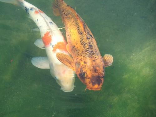 рыбы такие красивые и такие огромные