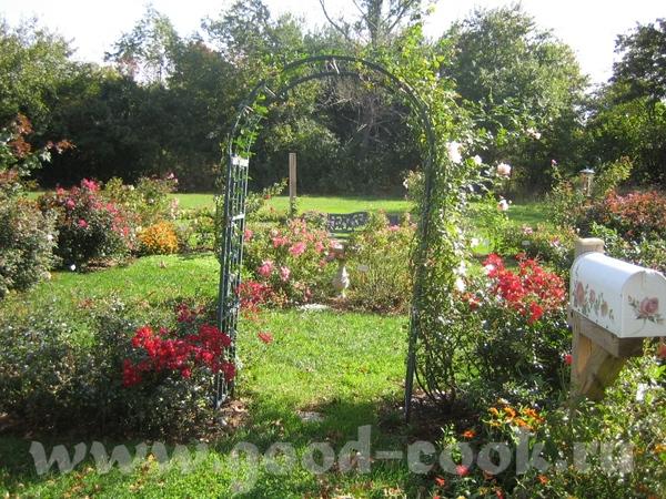 а потом мы набрели на что то типа маленького ботанического сада с красивыми цветами - 4