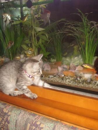 Привет аквариумисты - 2