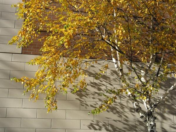 Танюша красивые фото, мох и листики дубовые - 2