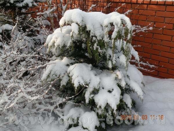 Девочки, мой огород летом вы видели, предлагаю посмотреть зимой - 5