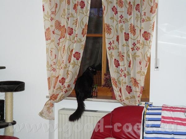 Как же вы кота не боитесь отпускать - 3