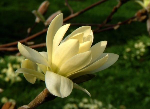 Так ведь это очень xорошо что появилось больше народа- форум на то и держится Весна, цветут магноли... - 3