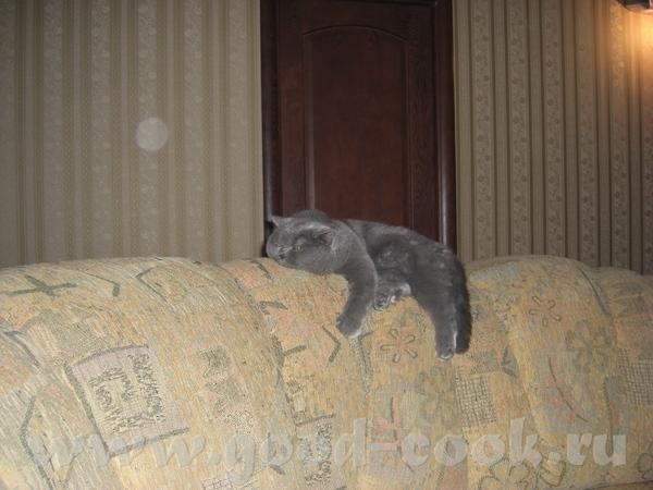 Наш красавчек, набегался и теперь спит, как говорят без задних ног