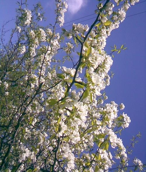 А вот немного и нашей весны - 5