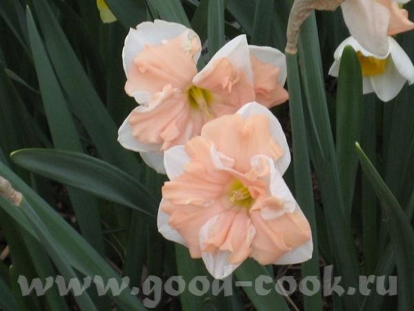 Покажу ещё несколько фоток с цветами из того-же скверика мне фотка понравилась с геоцинтами Танюш,... - 2
