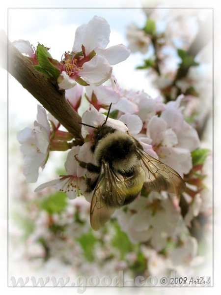 Розмарин, пчелка ты наша, поздравляем тебя с Днем рождения