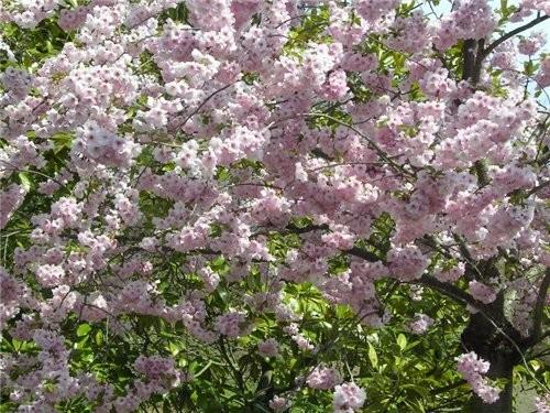 Весна, наконец-то - 2