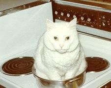 Для любителей котов и кошек