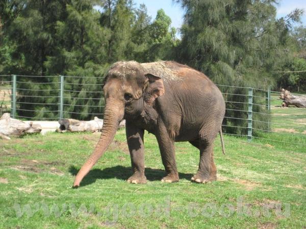 Слон посыпает себя пылью